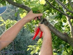 Medžių ir medelių genėjimas